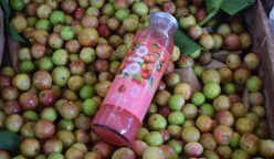 AJE 1 248x144 - Perú: AJE incorpora bebidas naturales amazónicas a su portafolio