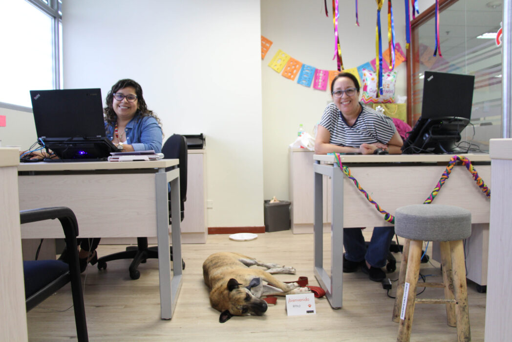 Apolo compartiendo un tiempo con Bertha y su compañera de área ELAMORSIEMPREGANA - Perú: Ripley recibe en sus oficinas a los perritos de sus trabajadores