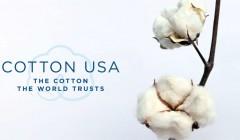 Cotton 1 240x140 - Perú es uno de los países con mejores oportunidades para la exportación e importación de algodón