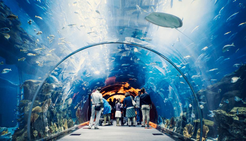 Dubai Mall Acuario Perú Retail - Centro comercial en Perú tendrá el primer acuario de América Latina