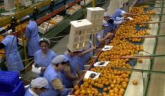 Exportaciones frutícolas