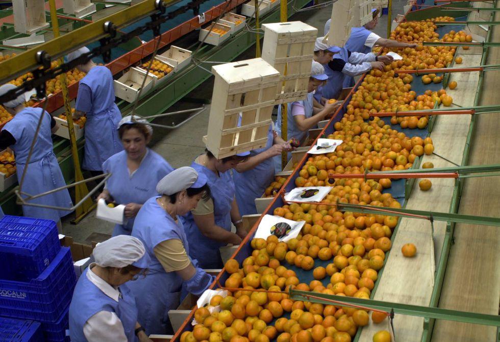 Exportaciones frutícolas - Perú: Exportaciones crecerían 3.5% durante el 2020