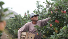 IMG 4175 240x140 - Tottus gestiona trato directo con agricultores y productores peruanos