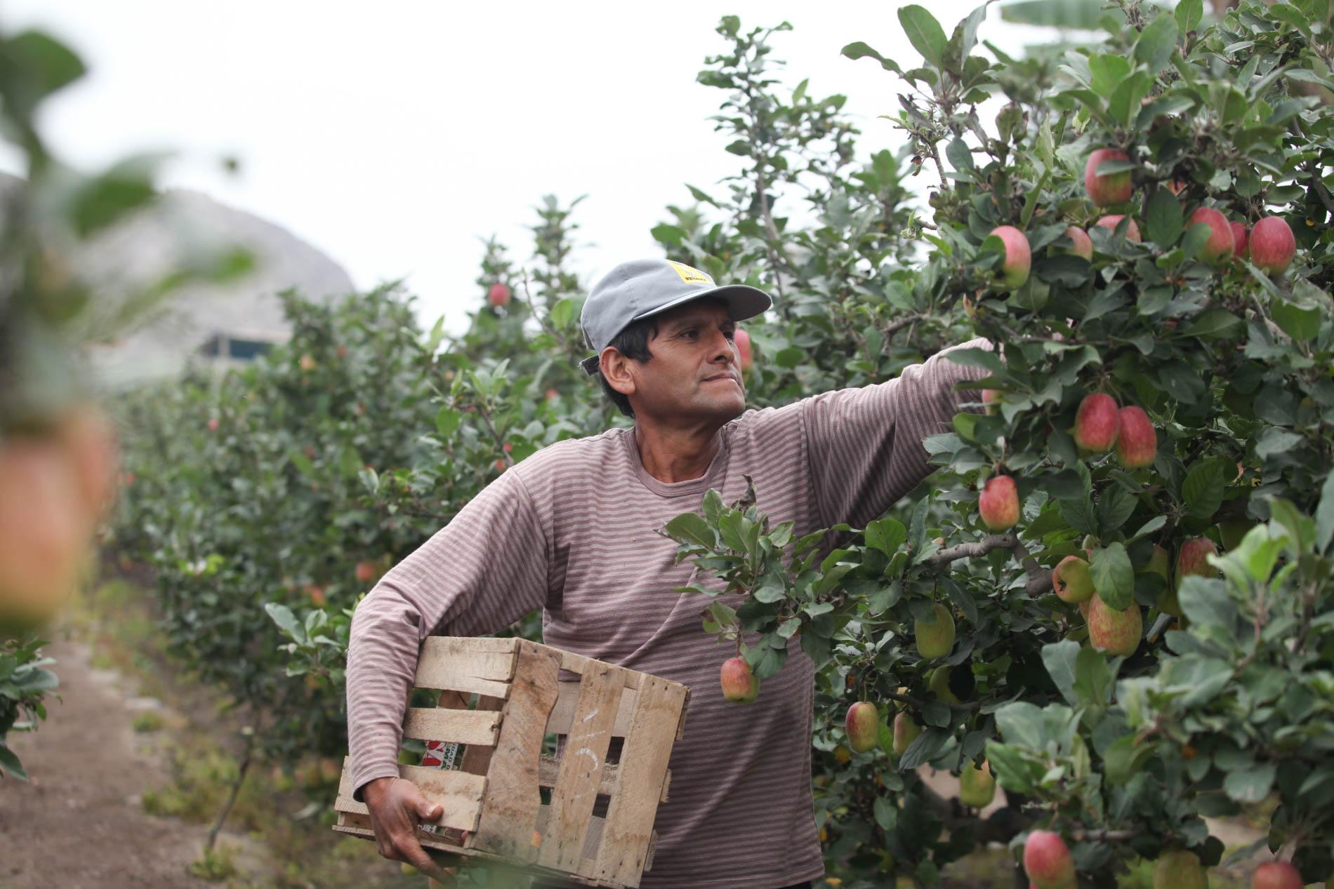 IMG 4175 - Tottus gestiona trato directo con agricultores y productores peruanos