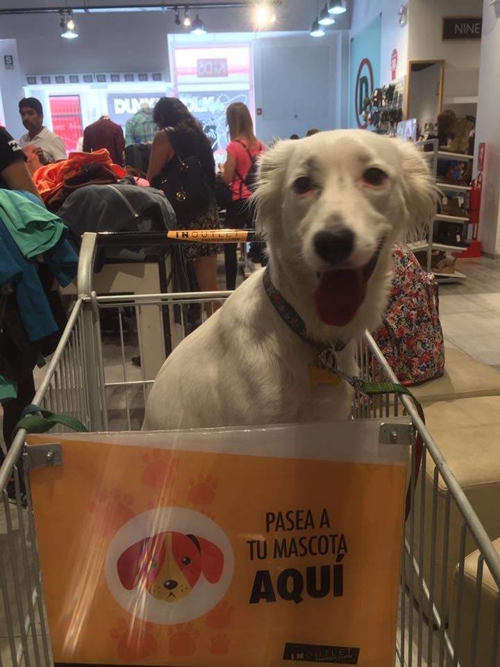 InOutlet Premium Lurín pet frendly 2 - InOutlet Premium Lurín se convierte en el primer mall 'pet friendly' del Perú
