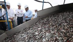 Exportaciones de Pesca