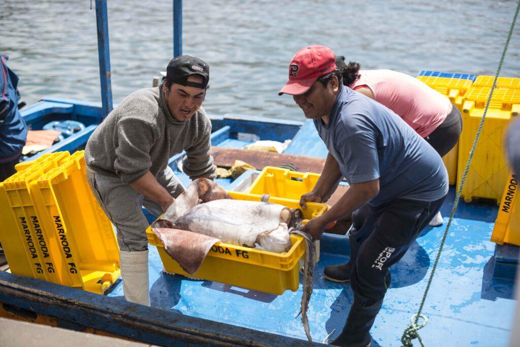 Pota 1024x683 - ¿La situación de China perjudicaría el desempeño de las exportaciones pesqueras?