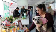 Princesa perro  Dueña Daniella Oviedo 240x140 - Perú: Ripley vuelve a recibir en sus oficinas a las mascotas de sus colaboradores