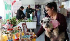 Princesa perro  Dueña Daniella Oviedo 248x144 - Perú: Ripley vuelve a recibir en sus oficinas a las mascotas de sus colaboradores