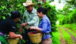 "Starbucks caficultores 248x144 - Starbucks Perú lanza campaña ""Todos Somos Café"" que busca apoyar a productores de café en Jaén"