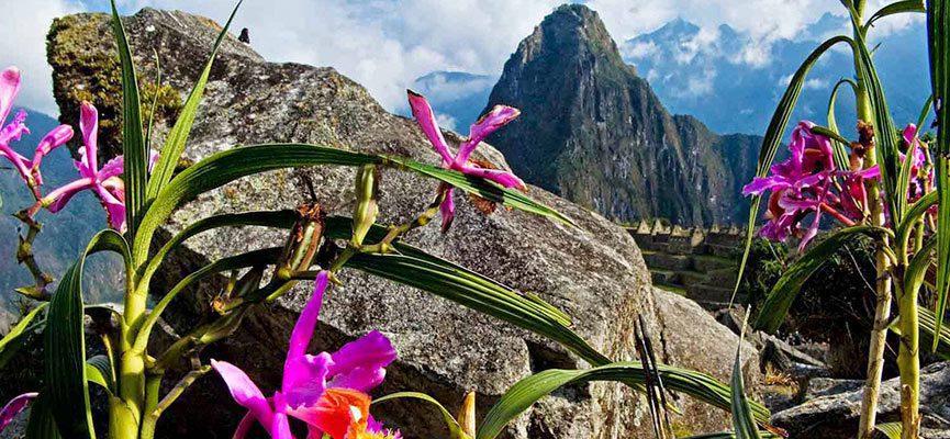 Suave Aromas flores del Valle Sagrado - Kimberly-Clark lanzó nuevo papel higiénico Suave con fragancias inspiradas en flores del Perú