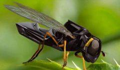 abejas roboticas walmaret 640x357 240x140 - Walmart patentó abejas robot autónomas