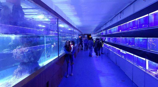 acuario comas - Perú Retail