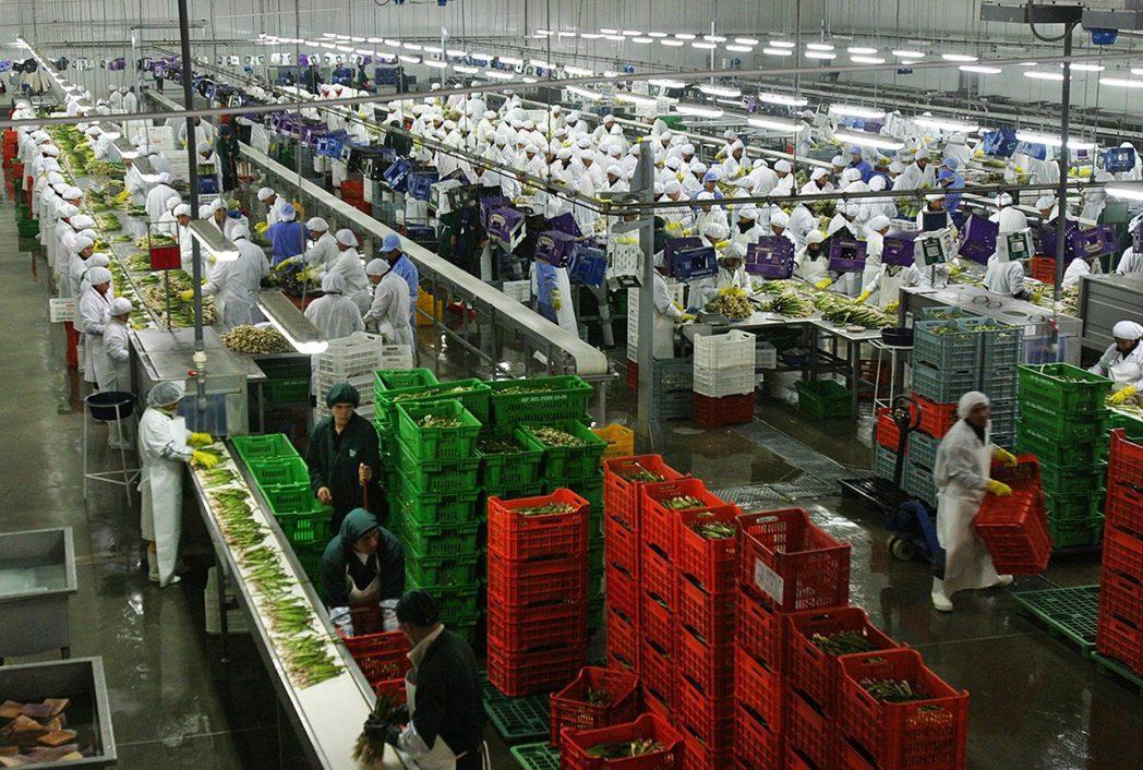 agroexportaciones peru - Perú: Agroexportaciones cayeron 25% las primeras dos semanas de la cuarentena
