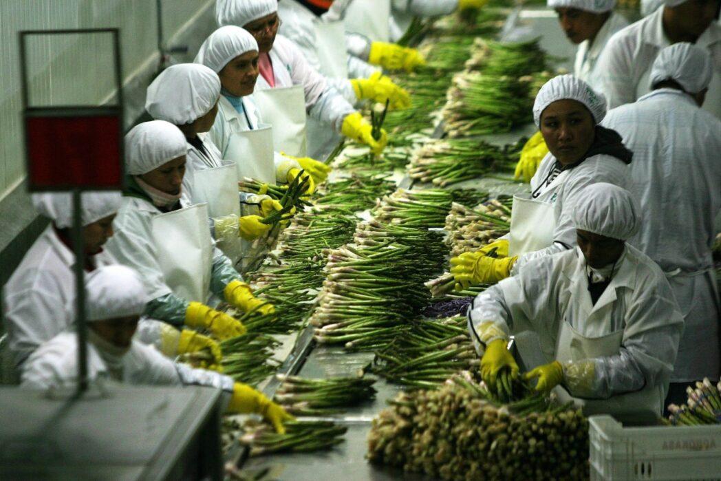 agroindustrial - Perú: Agroexportaciones cayeron 25% las primeras dos semanas de la cuarentena