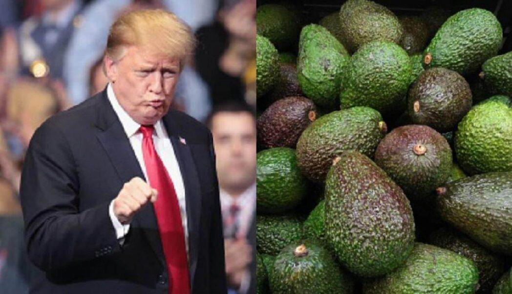 aguacate Trump - Perú Retail