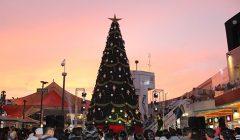 arbol megaplaza 240x140 - MegaPlaza encenderá el árbol de navidad más imponente de Lima Norte