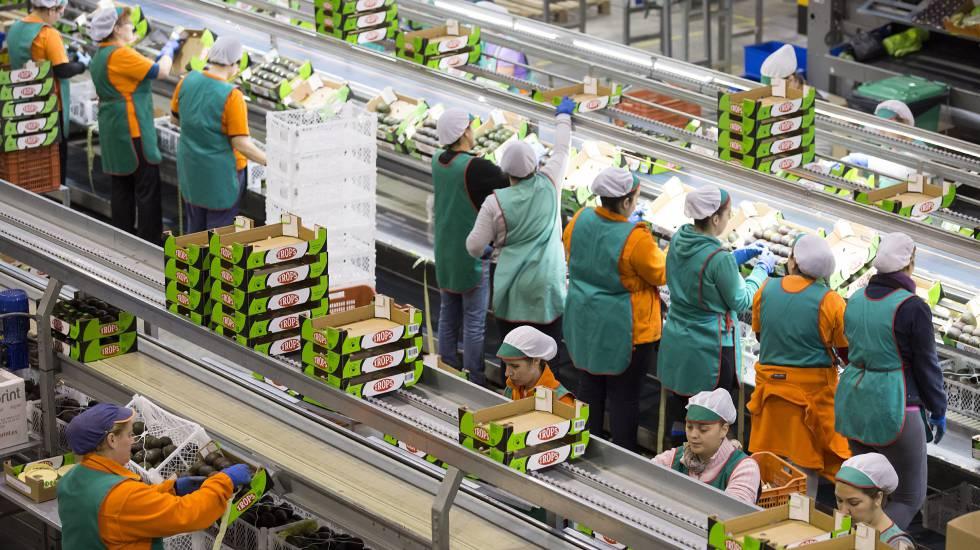 exportaciones del mango