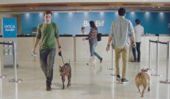 """banbif pet perú retail 248x144 - Perú: BanBif convierte todas sus sucursales en """"Pet friendly"""""""