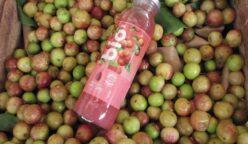 bio aje perú retail 248x144 - Grupo AJE lanzará marca de bebidas Bio en Ecuador