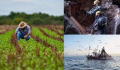 cadex-mineria-pesca-agroindustria