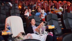 cinemex pet (3)
