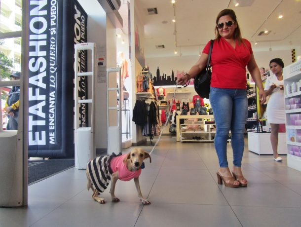 "etafashion pet friendly 1 - Etafashion es la primera tienda departamental ""pet friendly"" en Ecuador"