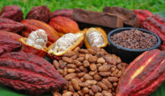 exportaciones cacao 240x140 - Perú exportó al mercado europeo en 2019 más de 50 mil toneladas de cacao