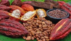 exportaciones cacao 248x144 - Perú exportó al mercado europeo en 2019 más de 50 mil toneladas de cacao