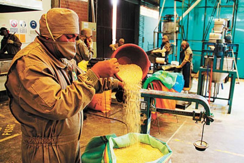 exportaciones quinua bolivia - Bolivia, la más afectada en precios de exportaciones por devaluación del yuan