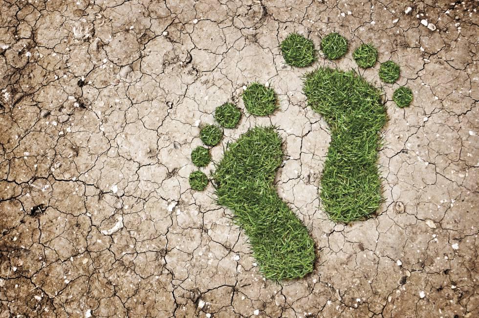 huella de carbono este - Natura gana premio mundial por convertirse en una empresa carbono neutro