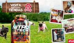 "lab nutition pet 240x140 - Tiendas Lab Nutrition son ahora ""Pet Friendly"""