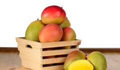 mago 2 240x140 - El mango, producto que se acerca a un nuevo récord en exportación