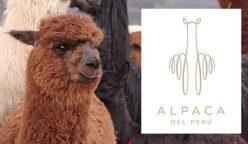 marca de alpaca del perú 248x144 - Marca Alpaca del Perú comenzará a vender sus productos por Alibaba en este 2019