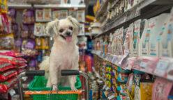 mascotas mercado perú retail 248x144 - Perú: El impacto de las mascotas en casi la mitad de los hogares peruanos