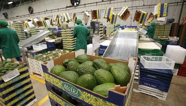 palta peruana Perú Retail - 'Burritos' en alza: Chipotle compraría paltas peruanas para paliar crisis de aranceles