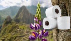 papel higienico aromas perú retail 240x140 - Kimberly-Clark lanzó nuevo papel higiénico Suave con fragancias inspiradas en flores del Perú