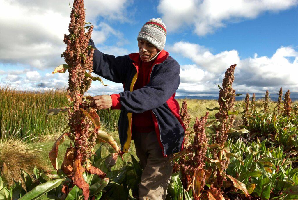 quinua bolivia 1024x688 - Bolivia: Por esta razón las ventas de quinua se han multiplicado en 5 veces más