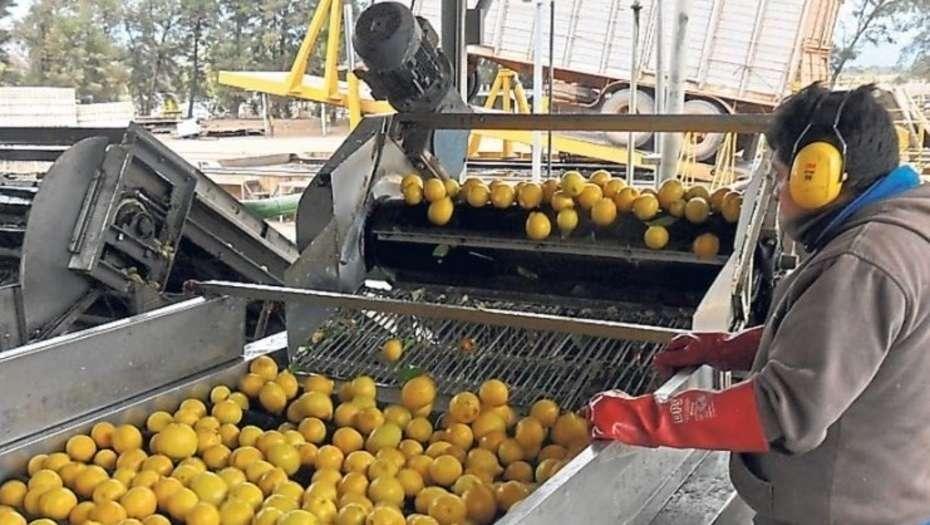 san miguel arg limones