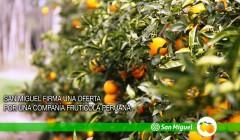san miguel arg peru 240x140 - Firma argentina compra empresa peruana Agrícola Hoja Redonda