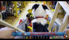 sodimac DOG FRIENDLY 2 240x140 - Sodimac implementa política 'Dog Friendly' en cuatro de sus tiendas en Perú