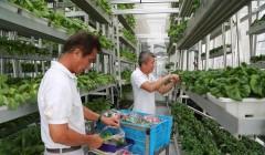 target granjas verticales 4 240x140 - Target planea realizar granjas verticales en sus tiendas para el 2017
