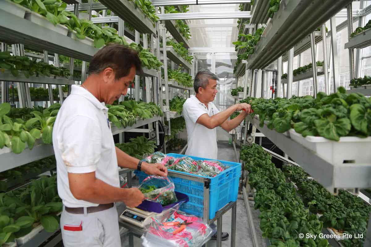 target granjas verticales 4 - Target planea realizar granjas verticales en sus tiendas para el 2017